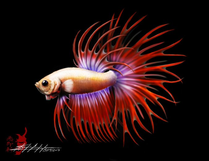 betta splendens art