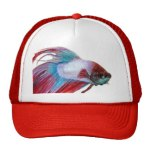 hat betta splendens