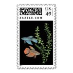 postage betta splendens